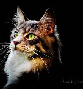 pussycat  Mia
