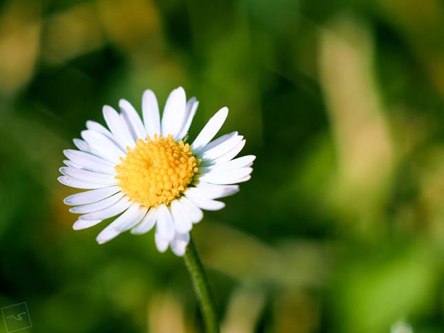 Slnečná záhrada II