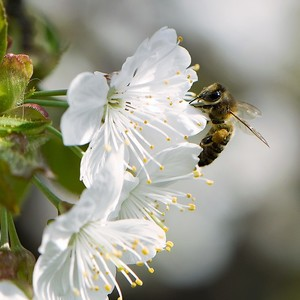 ...včielka...