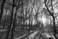 ...v lese...