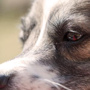 v oku psa ...