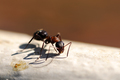 ...mravček...