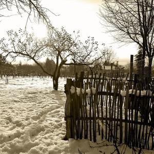 ...Zimná záhrada ...