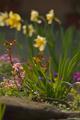 V jarnej záhrade