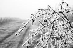 cesta zimy