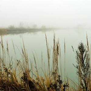 rybník v hmle