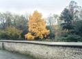 jeseň zlatistá