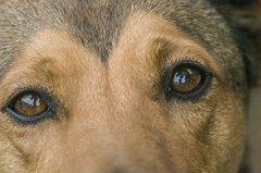 oči Neli