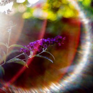 kvet motýlí