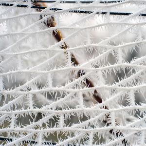 ihly v sieti