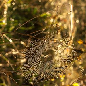 Pavoučí vinylka