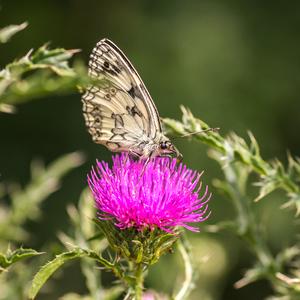 Sladký nektar