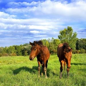 Kone na luke
