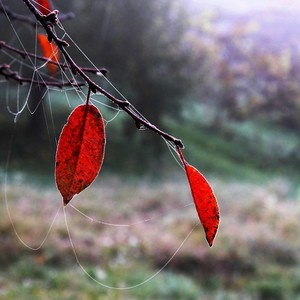 V jesennej záhrade...