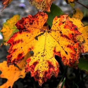 V jesenných farbách...2.