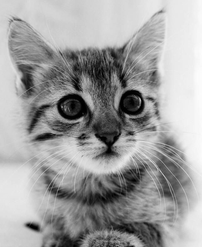 Mačiatko.3.