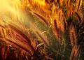 V žiari slnka........