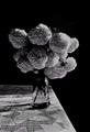Labda ruža..14.