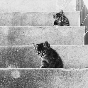 Na schodoch....