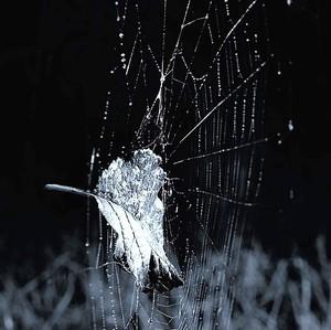 Zachytený v pavučine...