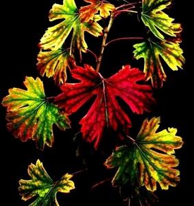 Farebná jeseň.2.