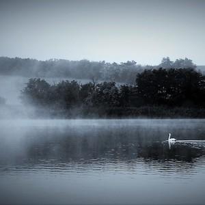 Ráno na rybníku....2.