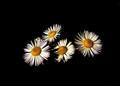 Kvetinková.