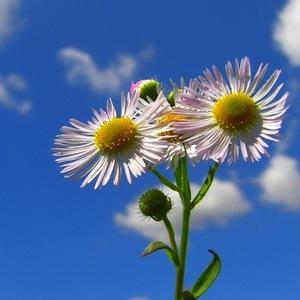 Kvetinová.