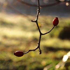Jesenné zastavenie.......3.
