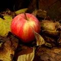 Jablko.