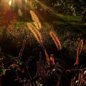 Podvečer v záhrade.