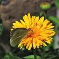 Motýľ na kvete..