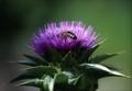 Usilovná včielka.