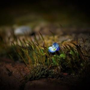 Príroda sa prebúdza......3