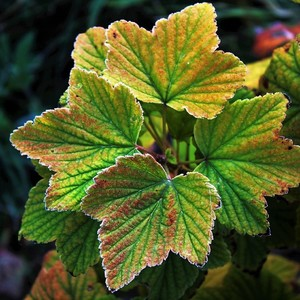 V jesenných farbách...5.