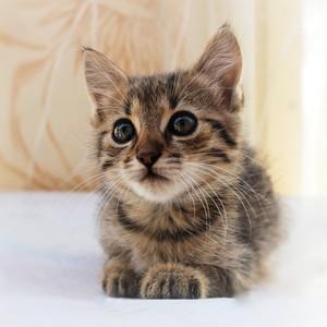 Mačiatko.