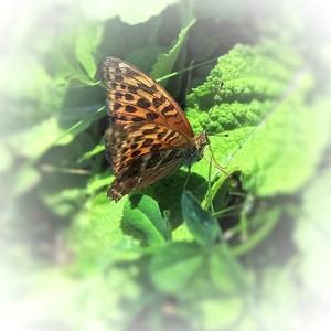 Motýľ...