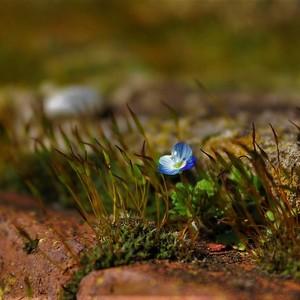 Príroda sa prebúdza......