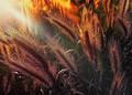 V žiari západu slnka.........