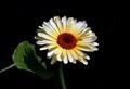 Kvet a tieň......