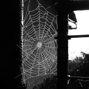 Pavučina.
