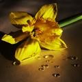Žltá....