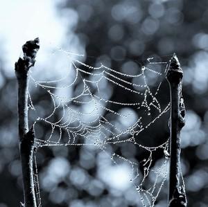 Jesenná čipka...