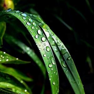 Po daždi....2.