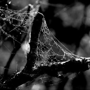 Ráno v pavučinách....