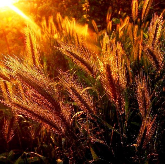 V lúčoch zapadajúceho slnka.2