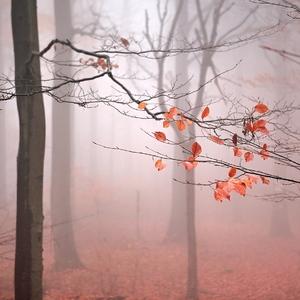 ....v mlhovém lese...