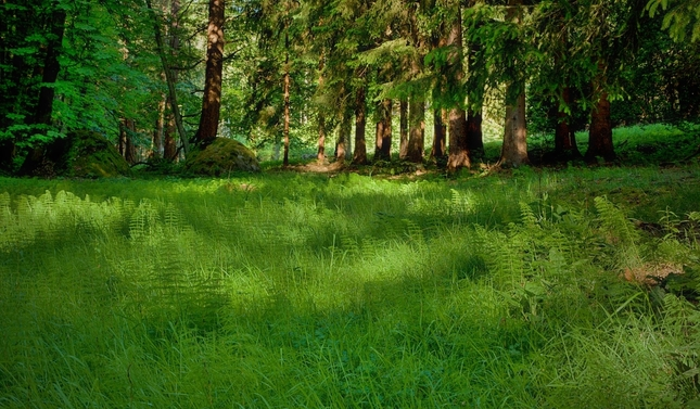 ...v přesličkovém lese....