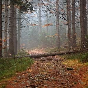 ...podzimní nálada......