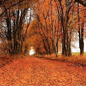 ...do podzimu.....